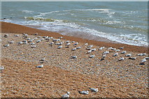 TQ8109 : Birds on the beach by N Chadwick