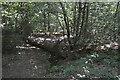 TQ1092 : Oxhey Woods by N Chadwick