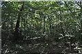 TQ1091 : Oxhey Woods by N Chadwick