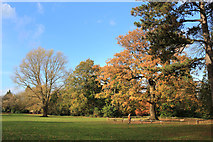 TQ1289 : Autumn Colours, Pinner Memorial Park by Des Blenkinsopp