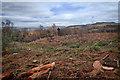 NZ5913 : Clear Felling, Hutton Lowcross Woods by Mick Garratt