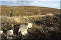 NJ2034 : Looking towards Cnoc na Sealg by Anne Burgess