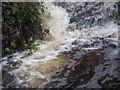 TL8193 : Weir at Lynford Lakes by David Pashley