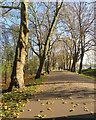 TF6219 : King's Lynn: The Walks by John Sutton