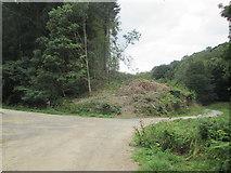 SE5584 : Forest  track  junction by Martin Dawes