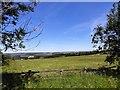 NZ1152 : Hay field beside Medomsley Road by Robert Graham