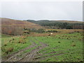 NS2988 : Rough grazing and woodland, Glen Fruin by Jonathan Thacker