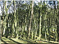 NY8638 : Ullsfield Plantation by Mike Quinn