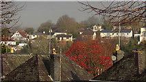 SX9065 : Autumnal glimpse from Parkhurst Road, Torre by Derek Harper
