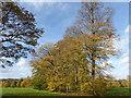 TQ4871 : Autumn at Foots Cray Meadows by Marathon