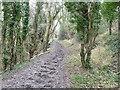 TQ2611 : Bridleway below Saddlescombe Road by Robin Webster