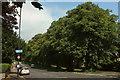 ST5874 : Redland Grove by Derek Harper
