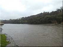 SX4268 : Looking up the River Tamar from Cotehele Quay by David Smith