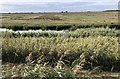 TL5495 : View of wetland habitats from hide by Katie