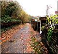 ST1494 : Fallen leaves on a side road in Ystrad Mynach by Jaggery