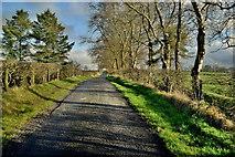H5472 : Roeglen Road by Kenneth  Allen