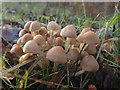 TL7895 : Fungi macro by David Pashley