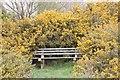 TF8905 : Flowery seat by David Pashley