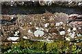 NX9921 : Bridge name/date stone for Barngill Bridge by Roger Templeman