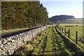 NY2498 : Multi user trail, Eskdalemuir by Richard Webb