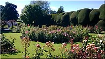 NZ1221 : Raby Castle gardens with the yew hedge by Michael Cooper