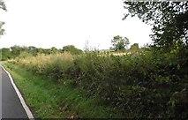 TQ3317 : Fields by Fragbarrow Lane, Burgess Hill by David Howard