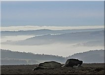 SK2681 : Above Burbage Edge by Neil Theasby