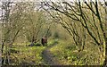 SK4453 : Pinxton Canal Footpath by Alan Murray-Rust