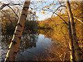 TL2188 : Pond in Jackson's Covert, Holme Fen by Hugh Venables
