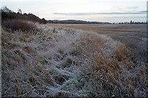 NH6454 : Day-long frost by Tullich Wood by Julian Paren