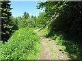 SO1053 : The path down by Bill Nicholls