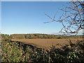 TG0339 : Hull Wood near Smokers Hole by Adrian S Pye
