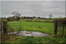 H5070 : An open field, Donaghanie by Kenneth  Allen