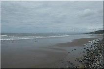 SH6014 : Gull on the beach by DS Pugh