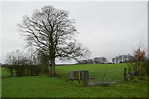H5371 : Tree and gate, Bancran by Kenneth  Allen