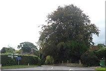 SO5793 : Crossroads and tree at Brockton by David Smith