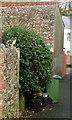 SX9066 : Cat and alley, Hele by Derek Harper