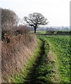 SE3836 : Footpath south of Scholes by Gordon Hatton