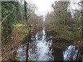 TL8193 : Taken from bridge over Lynford Lakes by David Pashley
