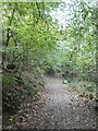 SW8240 : Footpath in Namphillows Wood by David Smith