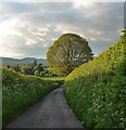SO4485 : Country road near Strefford (2) by Stephen Richards