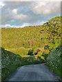 SO4485 : Strefford Wood by Stephen Richards