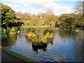 TQ3204 : Queens Park Pond - Christmas Day 2018 by Paul Gillett