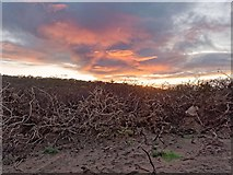 NJ1570 : Aftermath of Summer Gorse Fire by valenta