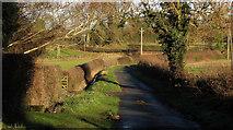 SE3265 : Mains Lane by Derek Harper