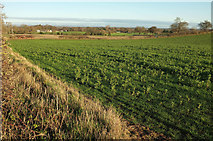 SE3265 : Field by Mains Lane by Derek Harper