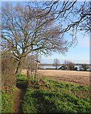 TM2844 : Waldringfield: footpath to the river by John Sutton