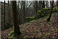 SE0652 : Redundant Wall in Lob Wood by Chris Heaton