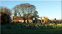 SE3265 : Tree and church, Bishop Monkton by Derek Harper