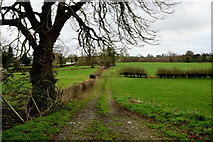 H5956 : Lane along a field, Cleanally by Kenneth  Allen